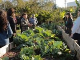 Lei faz de Florianópolis a 1ª cidade do Brasil livre de agrotóxicos